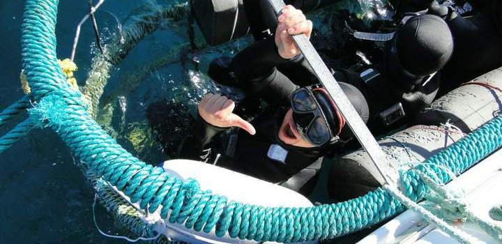 Auge in Auge mit dem Endgegner – Great White Shark Cagediving in Gansbaai, Südafrika